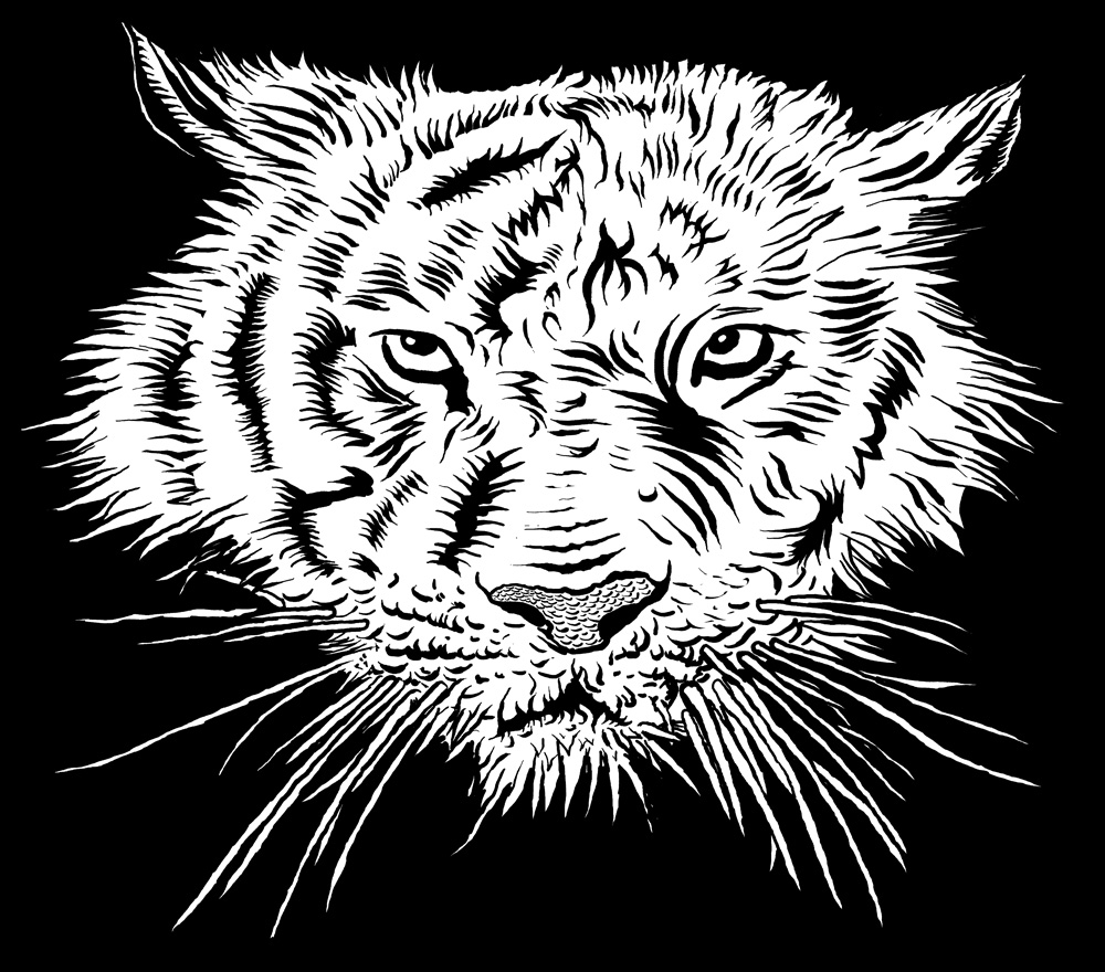 tiger-illustration